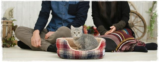 猫仕事の将来性