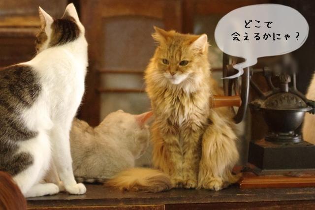 猫関連の仕事には何があるのか