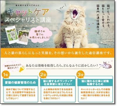 猫の仕事「キャットケアスペシャリスト」