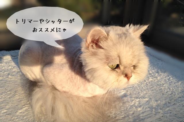 副業として猫関連の仕事をすることは可能か