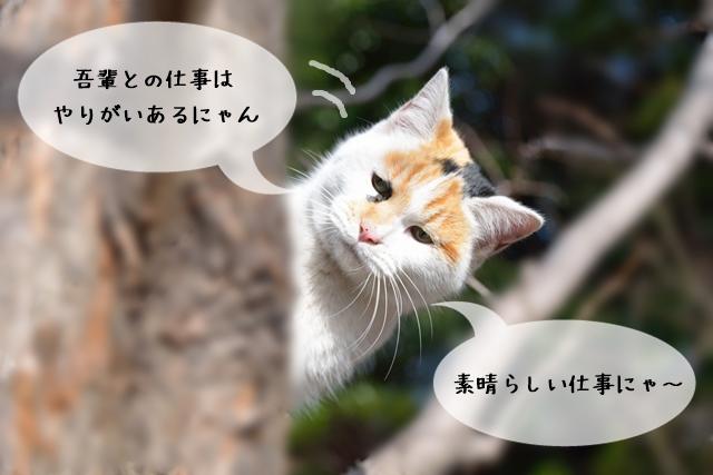 猫関連の仕事のやりがい