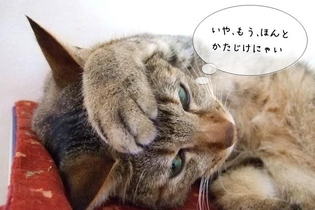 猫に携わる仕事で大変な部分
