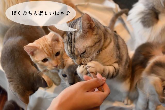 猫関連の仕事での楽しい面