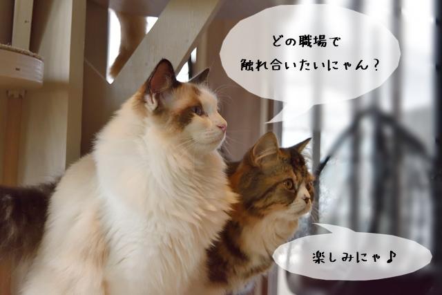 どんな仕事なら猫に触れ合えるのか