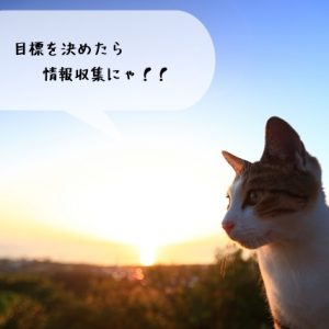 猫に携わる仕事に就きたい学生さんが準備しておきたい事