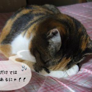 独学で猫関連の資格を学ぶことは難しい
