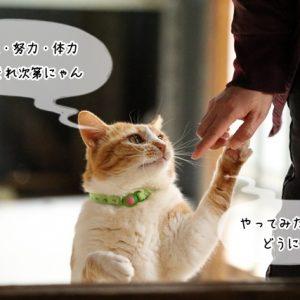 猫関連の職種は何歳でも可能か