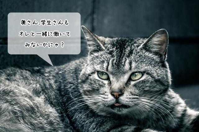 主婦、学生でも猫関連の仕事に就けるのか