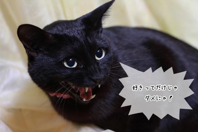 猫関連の仕事に向いている適正と性格