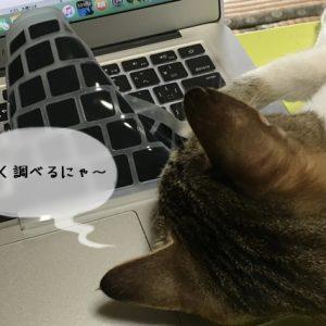 猫に携わる仕事に就くまでのステップ
