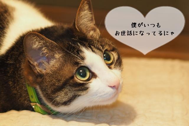 猫関連の仕事に就いているプロはどんな資格を持っているのか