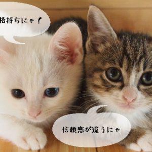 猫関連の仕事に就くのに資格の有無の差は