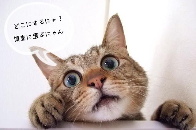 猫関連の資格取得スクールの選び方