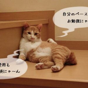 猫関連資格の通信講座のメリットと特徴