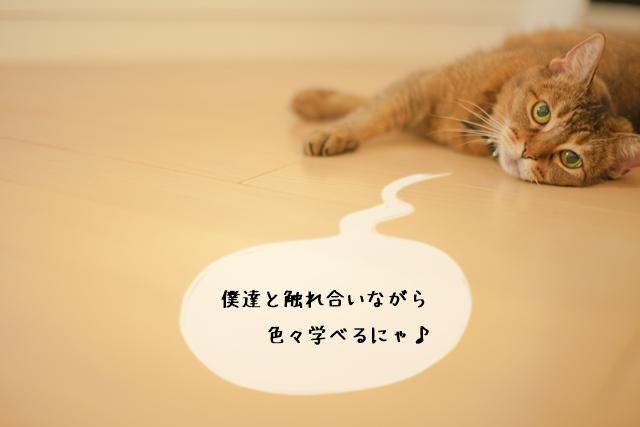 猫関連の資格専門学校の特徴とメリット