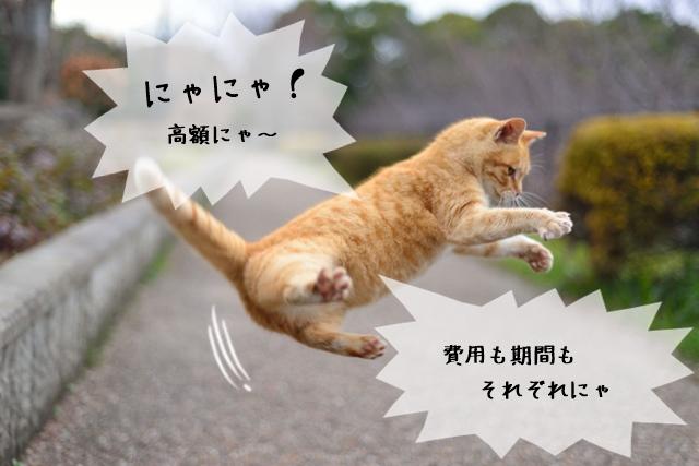 猫関連の資格を取るまでの期間や費用